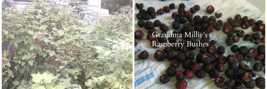 raspberry collage.2