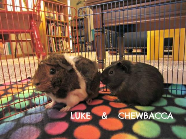 luke and chewbacca