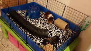 Luke and Chewbacca's cage